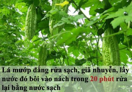 tam-biet-mui-hoi-nach-kho-chiu-ngay-he-tri-hoi-nach-bang-nguyen-lieu-thien-nhien--10--1464136790-width500height350