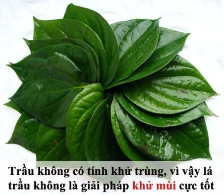 tam-biet-mui-hoi-nach-kho-chiu-ngay-he-tri-hoi-nach-bang-nguyen-lieu-thien-nhien--8--1464136790-width500height435